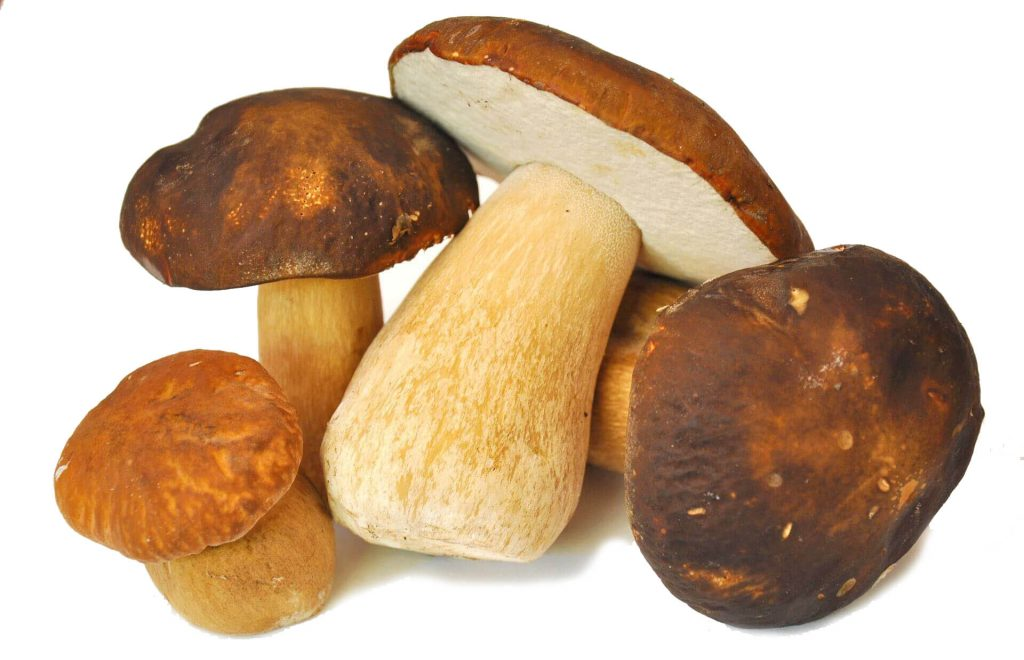 Porcini Mushrooms wholesale supplier romania